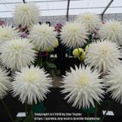 Location: Harrogate Autumn Flower show, YorkshireDate: 2018-09-15