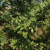 Location: Downingtown, PennsylvaniaDate: 2015-10-07seeds and foliage