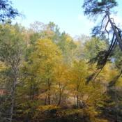 Location: Bushkill Falls in northeast PennsylvaniaDate: 2018-10-25trees in golden fall color on mountainside