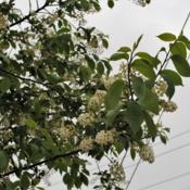 Location: Downingtown, PennsylvaniaDate: 2017-04-26closer shot of flowers and foliage in spring