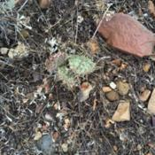 Location: West Jordan, Utah, United StatesDate: 2016-01-23Some plants have been affected by some kind of rot that
