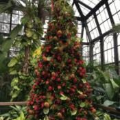 Location: Longwood Gardens, Kennett Square, Pennsylvania, USADate: 2018-12-09A Christmas tree made mostly of bromeliads
