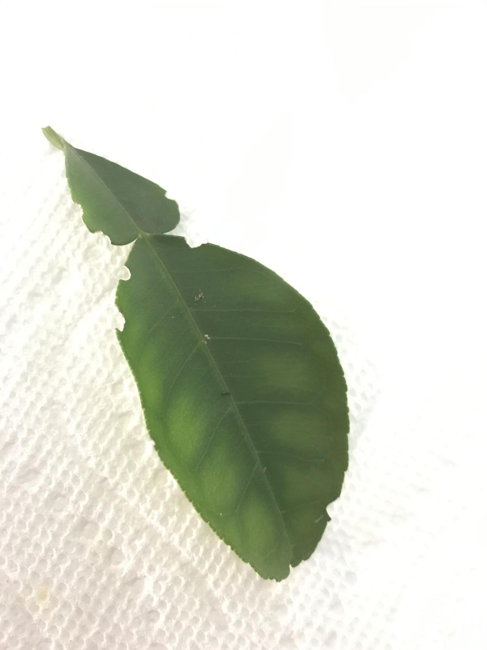 Images Of Pomelo Leaves