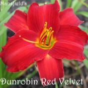 Location: Hertford NCDate: 2016-06-24Dunrobin Red Velvet
