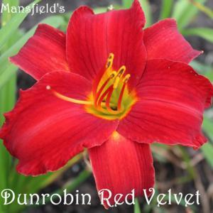Dunrobin Red Velvet