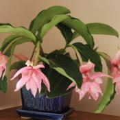 Location: New JerseyDate: 2014-06-10Houseplant in November