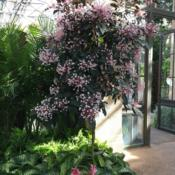 Location: Longwood Gardens Conservatory, Kennett Square, Pennsylvania, USADate: 2019-02-05