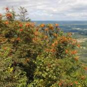 Location: Hawk Mountain Sanctuary, PennsylvaniaDate: 2015-08-27wild trees on mountain outlook
