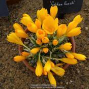 Location: RHS Harlow Carr alpine house, YorkshireDate: 2019-02-10