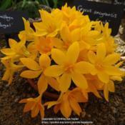 Location: RHS Harlow Carr alpine house, YorkshireDate: 2019-02-14