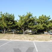 Location: Rehoboth Beach, DelawareDate: 2012-09-14a planted group near the beach