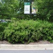 Location: Morton Arboretum in Lisle, IllinoisDate: 2015-06-19group in big parking lot island