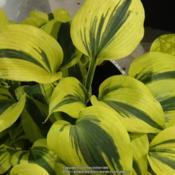 Location: 2019 Flower Show in PhiladelphiaDate: 2019-03-02seen at Proven Winners exhibit, 2019 Philadelphia Flowe