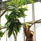 Location: Belle Isle Conservatory, Detroit, MIDate: 2015-07-17
