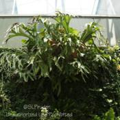 Location: Planterra Conservatory, West Bloomfield, MIDate: 2011-07-09