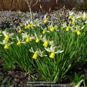 Location: RHS Harlow Carr, Yorkshire, UKDate: 2019-03-24