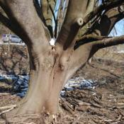Location: Downingtown, PennsylvaniaDate: 2019-03-09old trunk of old tree at former nursery location