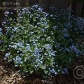 Location: Dearborn Heights, MIDate: 2010-05-04My yard, zone 6