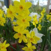Location: RHS Harlow Carr, Yorkshire, UKDate: 2019-04-13
