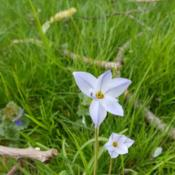 Location: Faversham, Kent, UKDate: 2019-04-13Any ideas on what this wildflower is?