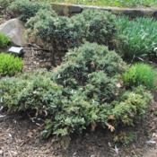 Location: West Chester, PennsylvaniaDate: 2019-04-11plants in a border planting