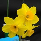 Location: Harrogate Flower ShowDate: 2019-04-27