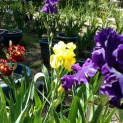 Photo by evelyninthegarden