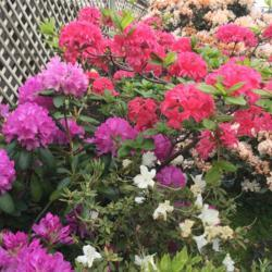 Photo by Meandmyroses