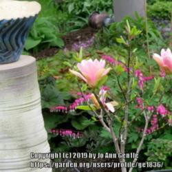 Photo by ge1836
