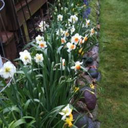 Photo by joannakat