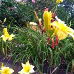 Photo by hiyall