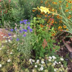 Photo by piksihk