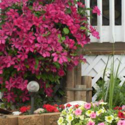 Photo by svslabaugh