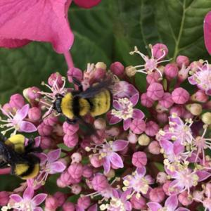 Busy and Happy Bumblebees