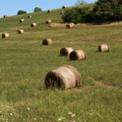 Location: Provence, FranceDate: 2019-07-30made into bales for animal feed