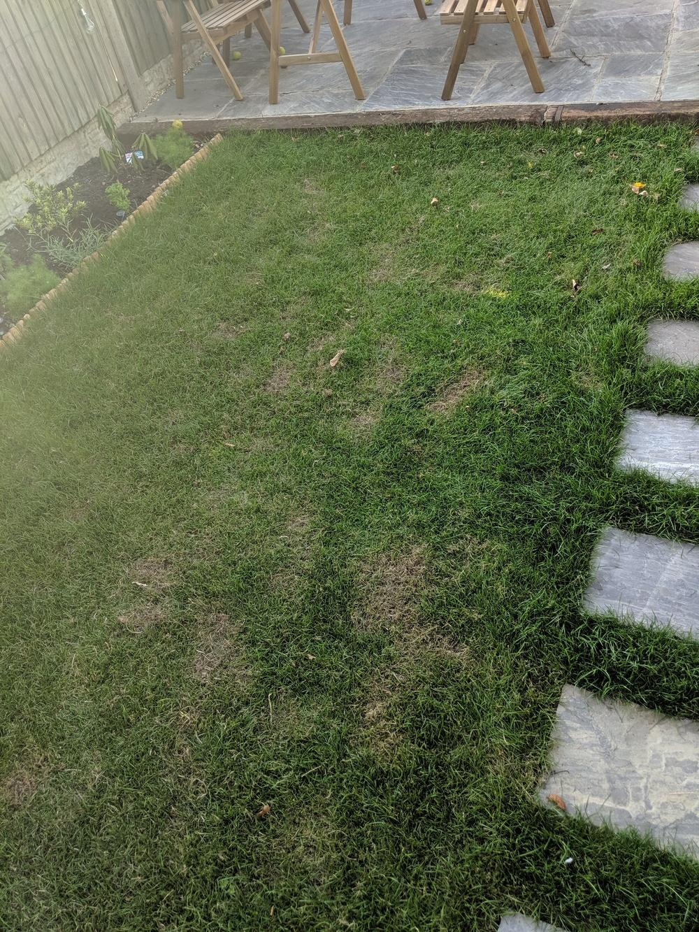 Ask A Question Forum Have I Killed My Lawn With Solabiol Garden Org