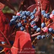 Location: Steinkopf  Nursery, Farmington Hills, MIDate: 2012-09-24