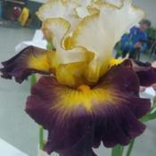 Location: San Diego, CADate: 2019-05-04taken at the 2019 San Diego iris spring show and sale,