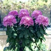 Location: Longwood Gardens, Kennet Square, Pennsylvania USADate: 2019-10-04