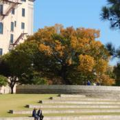 Location: At the Oklahoma City National MemorialDate: 10-19-2019The Survivor Tree - Ulmus americana [American Elm] in OkC 002