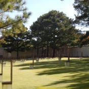 Location: At the Oklahoma City National Memorial [the Murrah Memorial]Date: 10-19-2019Loblolly Pine (Pinus taeda) in Oklahoma City 003