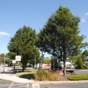 Location: Downingtown, PennsylvaniaDate: 2019-08-29trees planted around a parking lot and near sidewalks