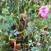 Location: Prince Edward IslandDate: 2018-08-21A beautiful bog, on the way to the National Seashore. In situ