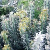 Date: 2019-04-25Marked plant at monte juic cactus garden, barcelona