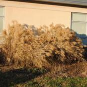 Location: Downingtown, PennsylvaniaDate: 2014-12-26plants in winter