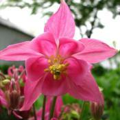 Location: Illinois, USDate: 2010-05-07Columbine NOID