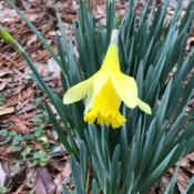 Location: Gardenfish gardenDate: February 7 2020First bloom of the year.