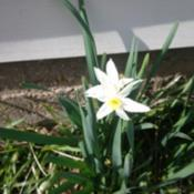 Location: Fort Worth, TXDate: 2020-01-14First flower, still blooming in mid February