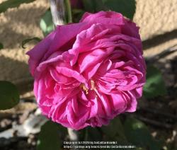 Thumb of 2020-03-08/SoCalGardenNut/3d4648