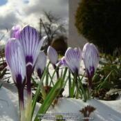 Location: BelarusDate: 2020-03-14Spring in our garden